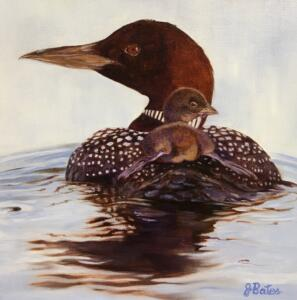 LOON LOVE  |  Oil on canvas  |  12 x 12  |  13.5 x 13.5 Framed  |  $850